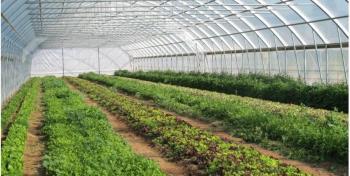 Besplatno predavanje: Uzgoj povrća u zaštićenim prostorima<br>