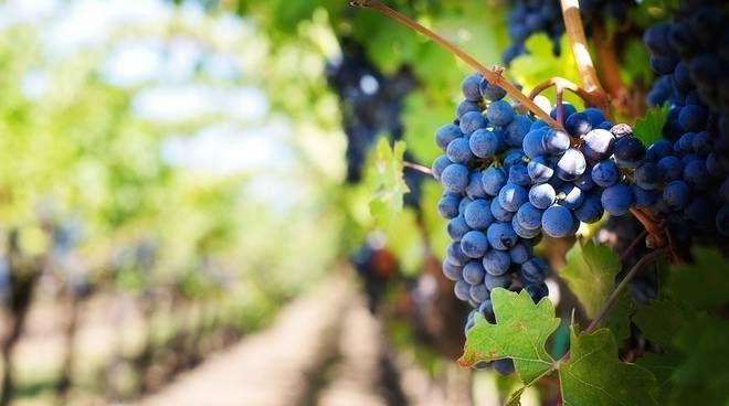 Objavljen natječaj za mjeru: Promidžba vina na tržištima trećih zemalja