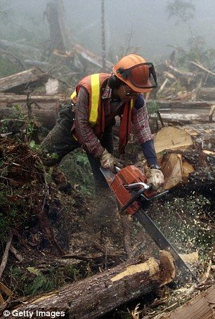 Šumski sjekač (m/ž) | Traktorist (m/ž) | Pomoćni radnik u šumi - kopčaš (m/ž)