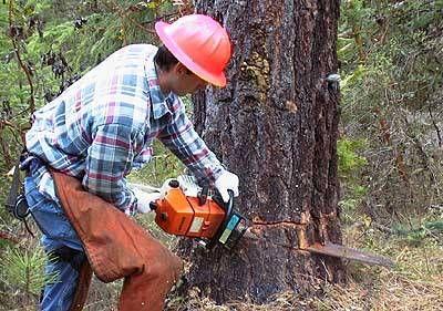 Šumski sjekač (m/ž)