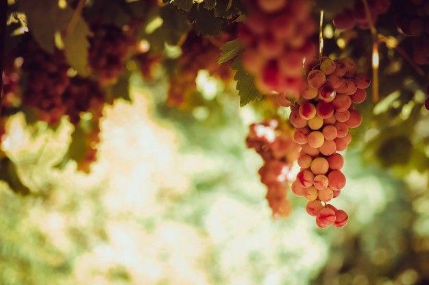 Vinari prijavite se na natječaj za promidžbu na tržištima trećih zemalja