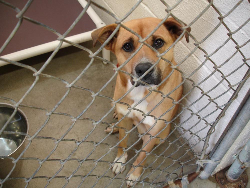 Njegovatelj napuštenih pasa u skloništu (m/ž)