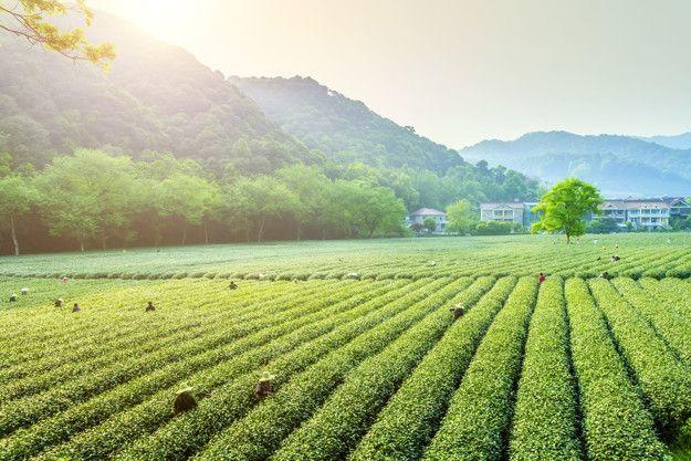 Otvoren LAG natječaj  Potpora razvoju malih poljoprivrednih gospodarstava
