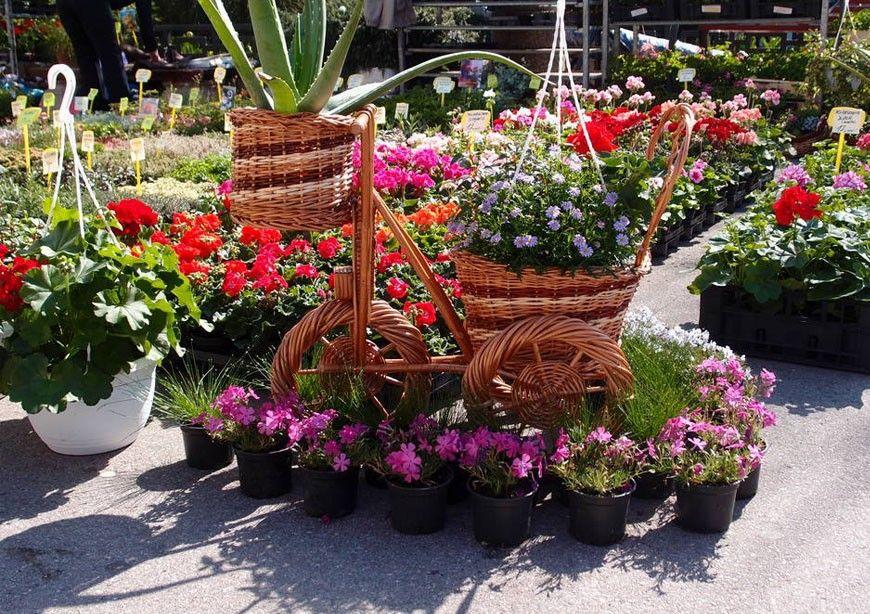 Festival cvijeća - Cvjetna priča Crikvenice