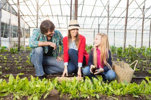 Eko vrt - kako da sami uzgojite zdravo voće i povrće