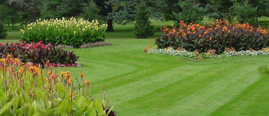 Mali vodič za prekrasan travnjak