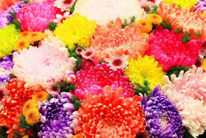 Bašćanski festival cvijeća slavi četvrti rođendan!