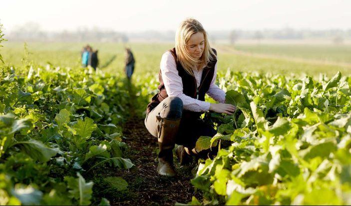 Natječaj za tip operacije 6.3.1.  Potpora razvoju malih poljoprivrednih gospodarstava