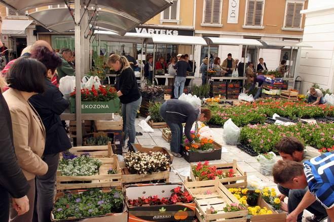 Prodaja sadnica građanima po povoljnim cijenama