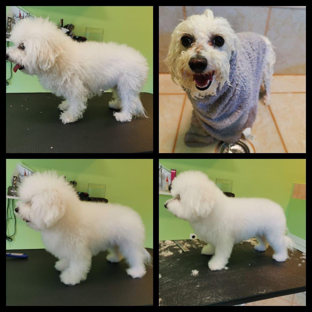 ŠiŠanja pasa prije i poslije